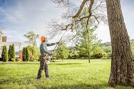 The Importance of Tree Health